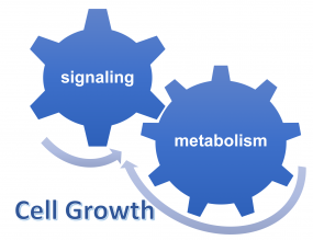 cell growth, signaling, metabolism