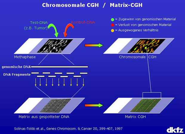 bacteria detected by chip Bioreporters for detection of chemical assaults provides an alternative to classical   cellular chemotaxis in a microfluidic chip is the creation of a microscale.