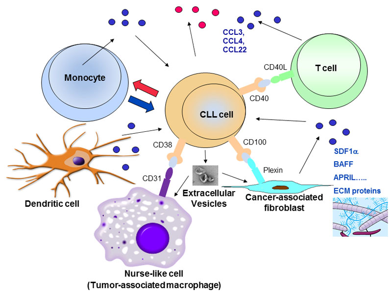 CLL En on lung circulatory system