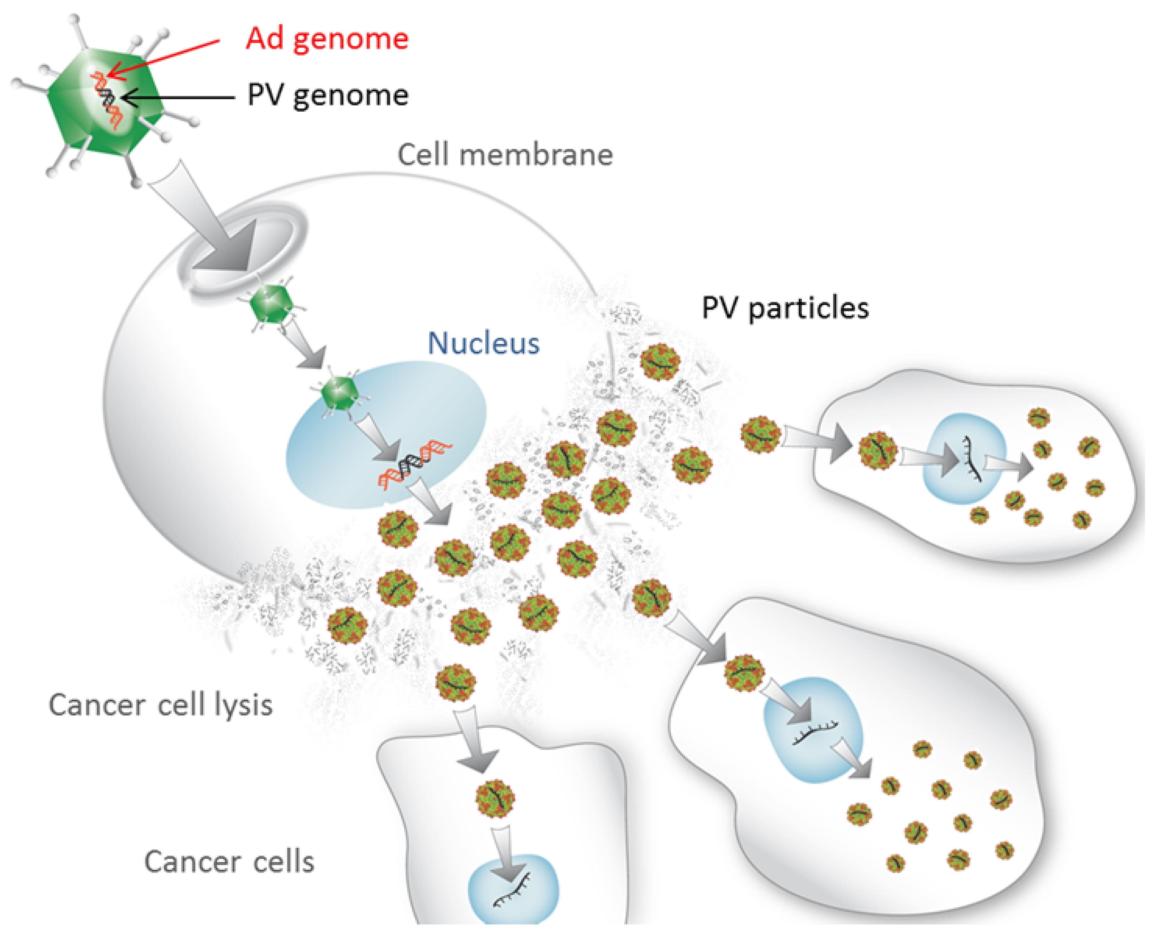 The Laboratory Of Oncolytic Virus Immuno Therapeutics Lovit