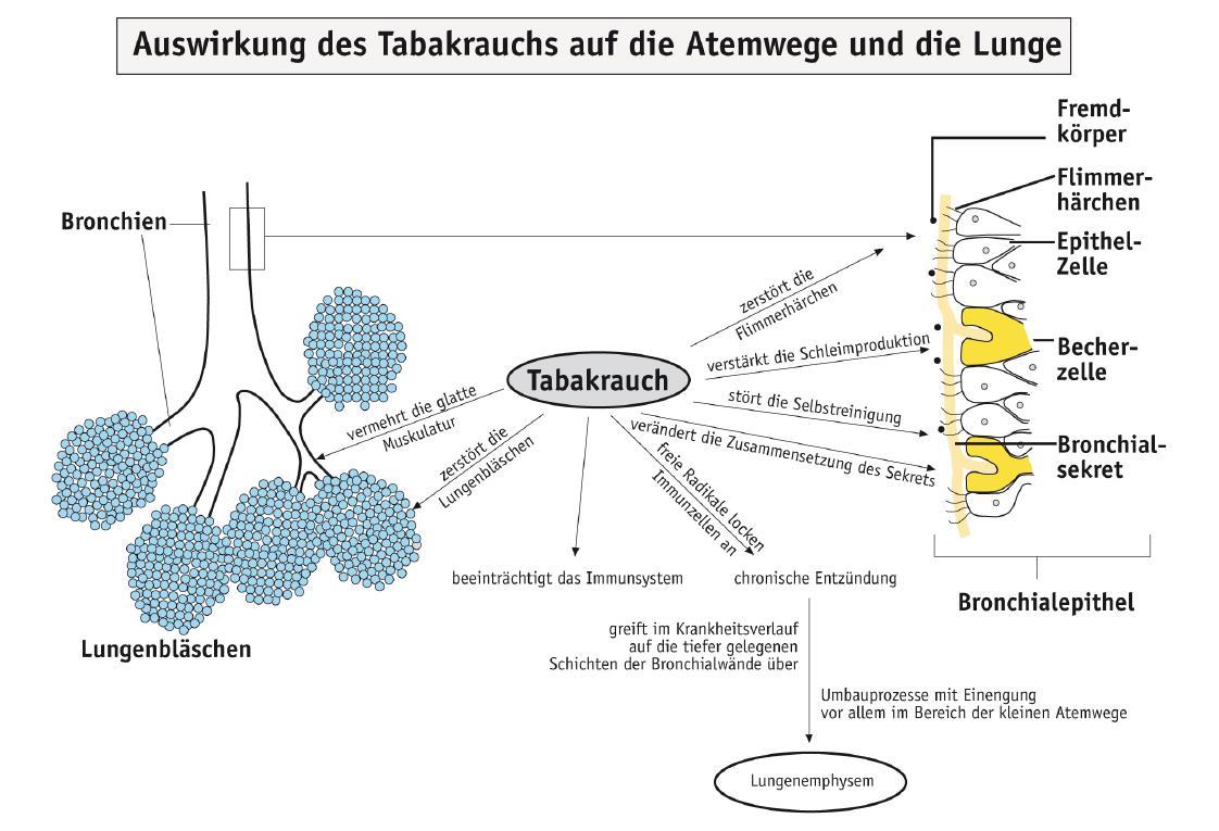 Die Auswirkungen des Rauchens auf die Lunge