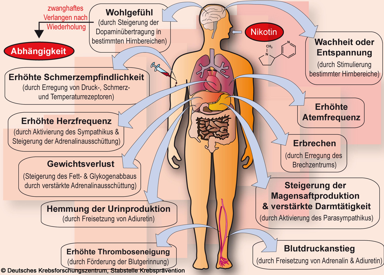 Biologie Nikotin PL by Helen Klammi on Prezi